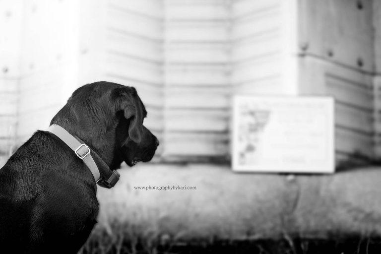 Dog looking at Plaque
