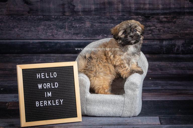 puppy portrait announcement taken by Kari McGill